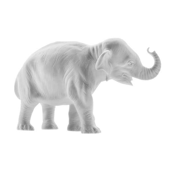 Junger Elefant Hilde Rüssel aufwärts