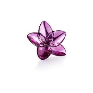Blüte peony